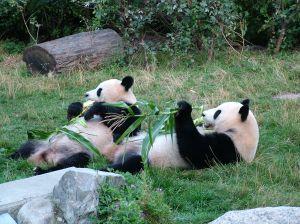 Oso panda egghead mayo, 6, 2006