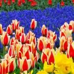 Holanda 10