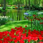 Holanda 11