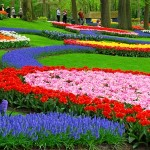 Holanda 7