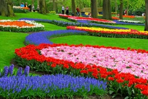 El mes de los tulipanes revista de arte logopress - Jardines de tulipanes en holanda ...