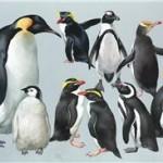 Pingüinos Est 12.000-18.000 dólares