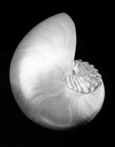 ShellandCrystal (1)