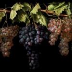 2.Bodegón con cuatro racimos de uvas. Juan Fernández »el Labrador». Museo del Prado