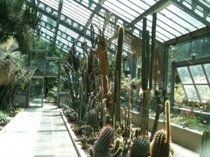 Real Jardín Botánico, Madrid- Invernadero Santiago Castroviejo Bolíbar -LOGOPRESS (5)