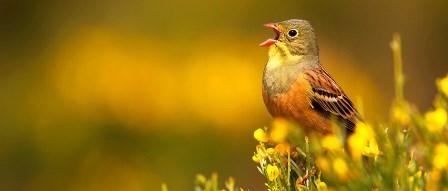 slides_ornitologia_05