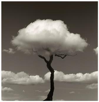 MADOZ arbol nube