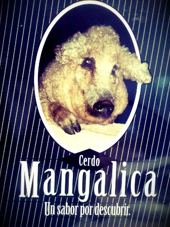 Mangalica 2