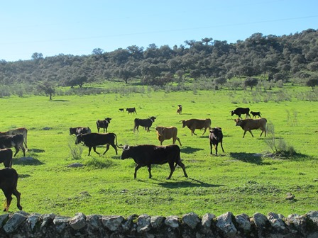 Extremadura y Portugal 123