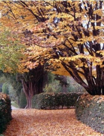 Real Jardín Botánico, paseos con hojas