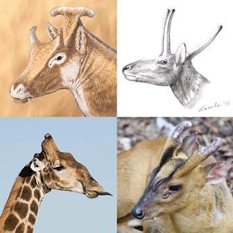 CSIC Girafas 1
