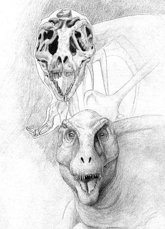 """Reconstrucción del Tyrannosaurus rex """"FNMH PR 2081"""", Marco Ansón"""