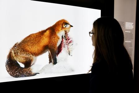la-muestra-reune-las-100-mejores-imagenes-de-2015-seleccionadas-en-el-concurso-anual-de-fotografia-de-naturaleza-que-organiza