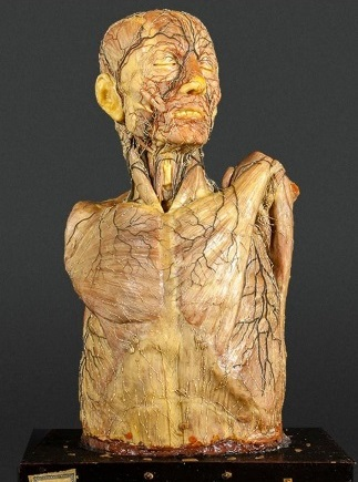 anatomía CAC UCM
