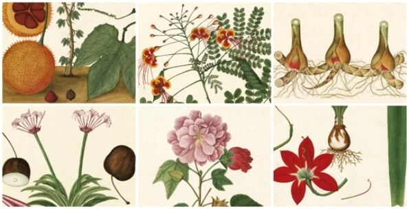 Calendario 2018 real jard n bot nico revista de arte for Calendario jardin botanico 2016